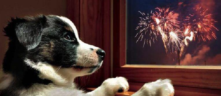 capodanno con i cani