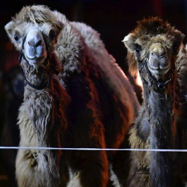 circo capodanno roma